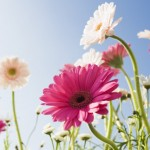 Blue_Sky_and_Flowers
